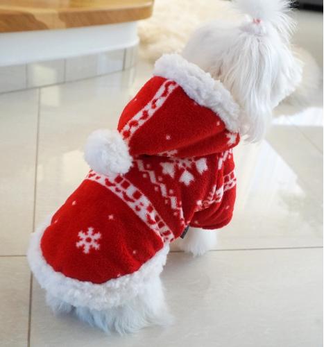 Kalėdinis paltukas