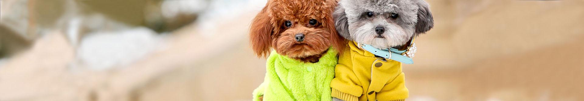 Rūbai šunims